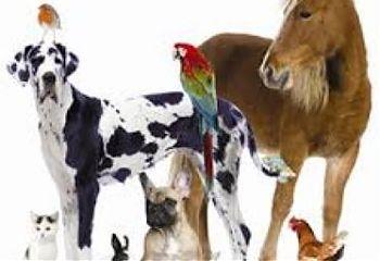 حيوانات.jpeg